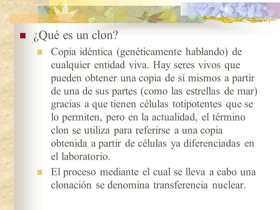 ¿Qué es un clon? Copia idéntica (genéticamente hablando) de cualquier entidad viva. Hay seres vivos que pueden obtener una copia de sí mismos a partir