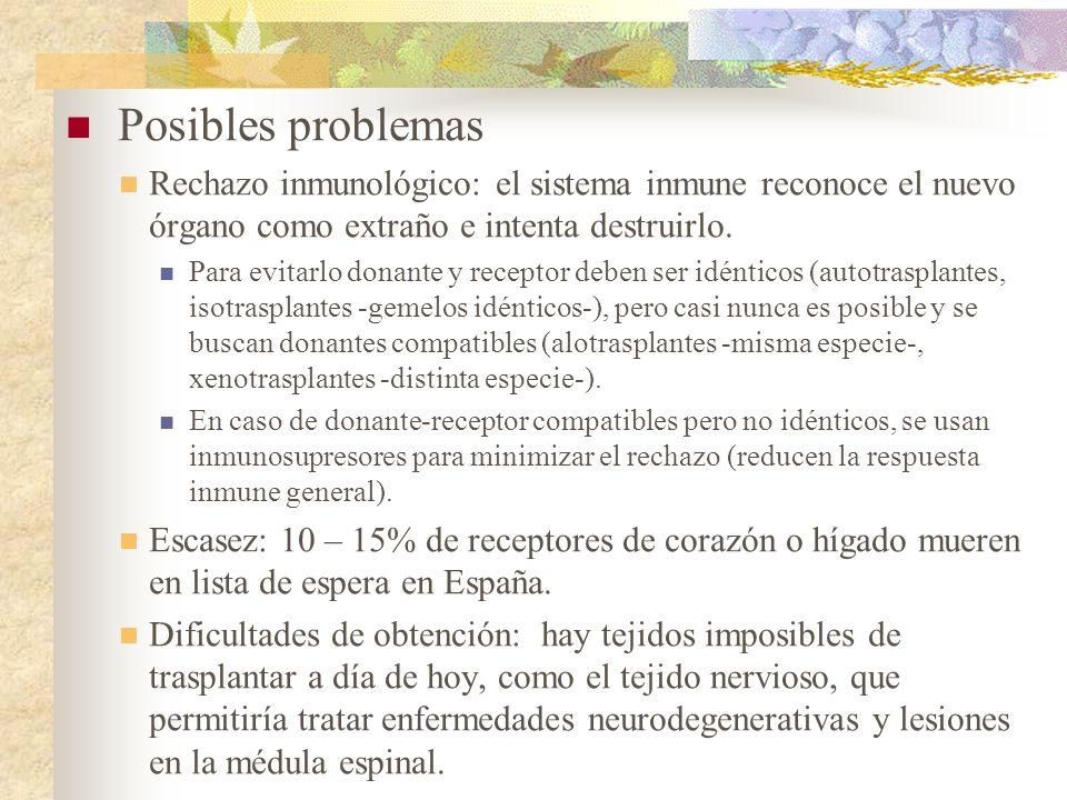 Posibles problemas Rechazo inmunológico: el sistema inmune reconoce el nuevo órgano como extraño e intenta destruirlo. Para evitarlo donante y recepto