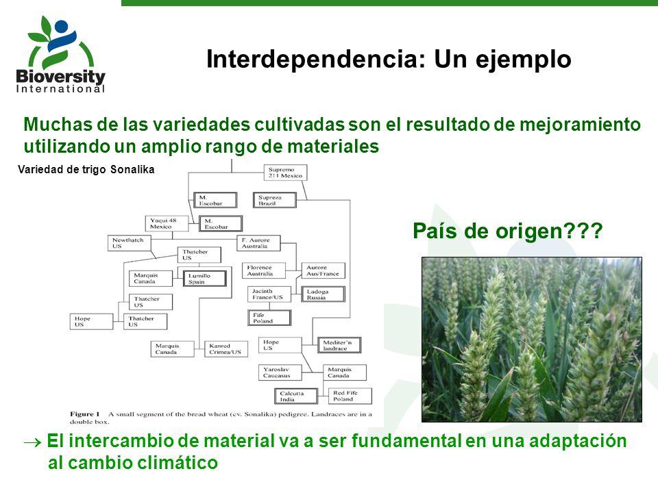Muchas de las variedades cultivadas son el resultado de mejoramiento utilizando un amplio rango de materiales El intercambio de material va a ser fund