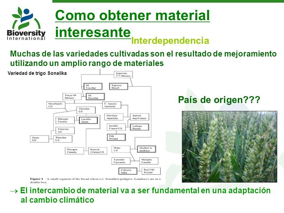 Interdependencia Muchas de las variedades cultivadas son el resultado de mejoramiento utilizando un amplio rango de materiales El intercambio de mater