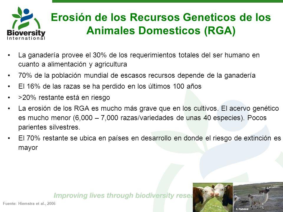 Erosión de los Recursos Geneticos de los Animales Domesticos (RGA) La ganadería provee el 30% de los requerimientos totales del ser humano en cuanto a