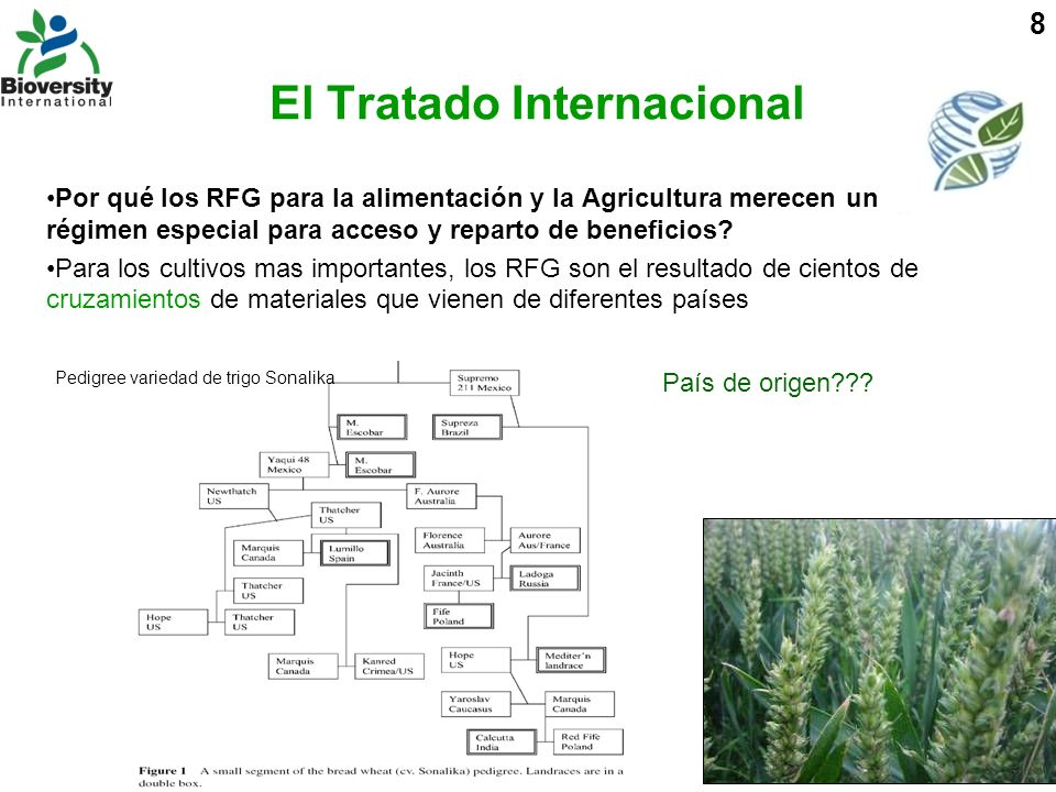 8 Por qué los RFG para la alimentación y la Agricultura merecen un régimen especial para acceso y reparto de beneficios? Para los cultivos mas importa