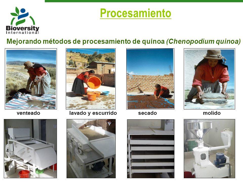 venteadolavado y escurrido secadomolido Mejorando métodos de procesamiento de quínoa (Chenopodium quinoa) Procesamiento