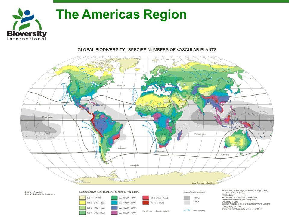 The Americas Region