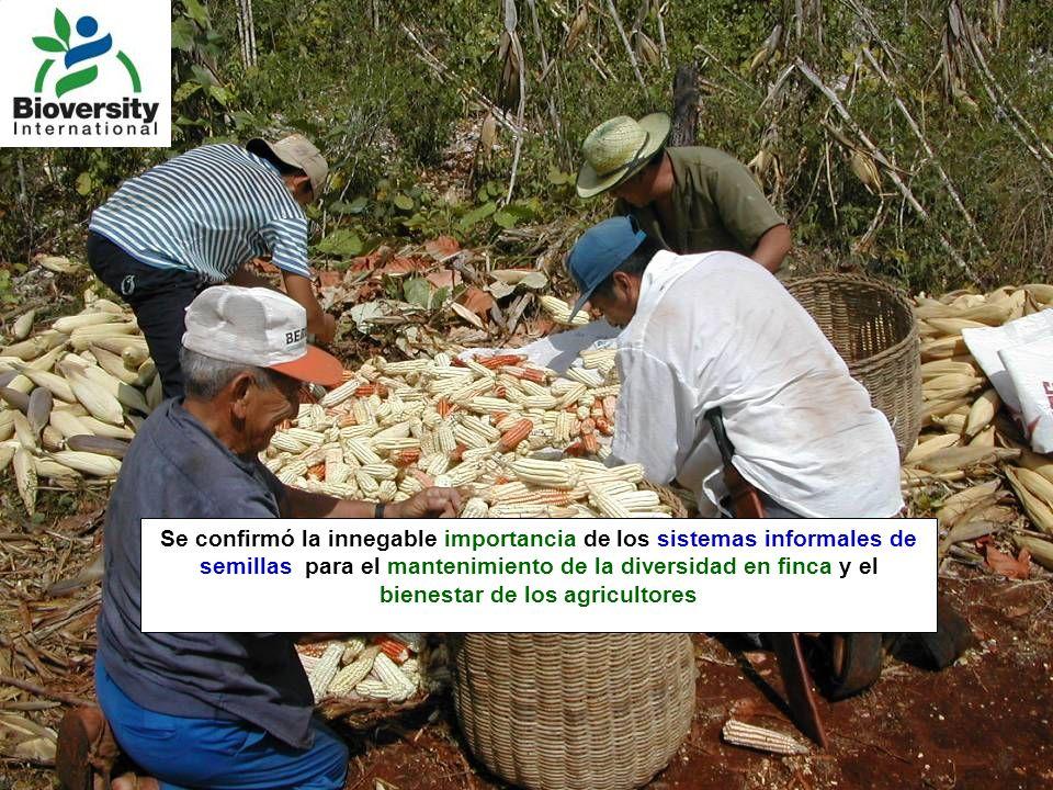 Se confirmó la innegable importancia de los sistemas informales de semillas para el mantenimiento de la diversidad en finca y el bienestar de los agri