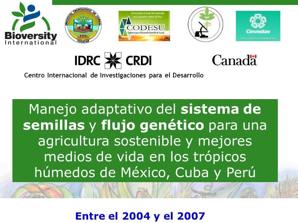 Manejo adaptativo del sistema de semillas y flujo genético para una agricultura sostenible y mejores medios de vida en los trópicos húmedos de México, Cuba y Perú Centro Internacional de Investigaciones para el Desarrollo Entre el 2004 y el 2007