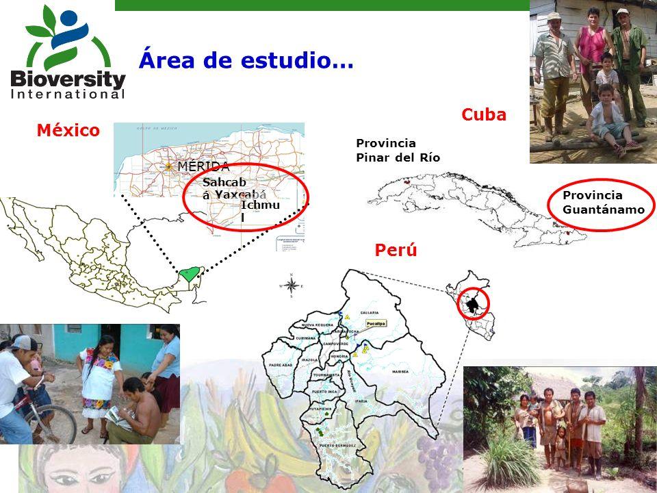 Yaxcabá Sahcab á Ichmu l MÉRIDA Provincia Pinar del Río Provincia Guantánamo México Cuba Perú Área de estudio…