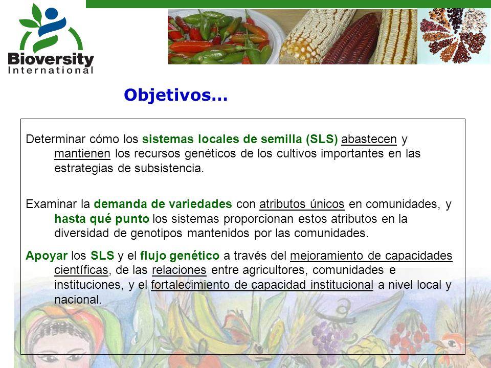 Determinar cómo los sistemas locales de semilla (SLS) abastecen y mantienen los recursos genéticos de los cultivos importantes en las estrategias de subsistencia.