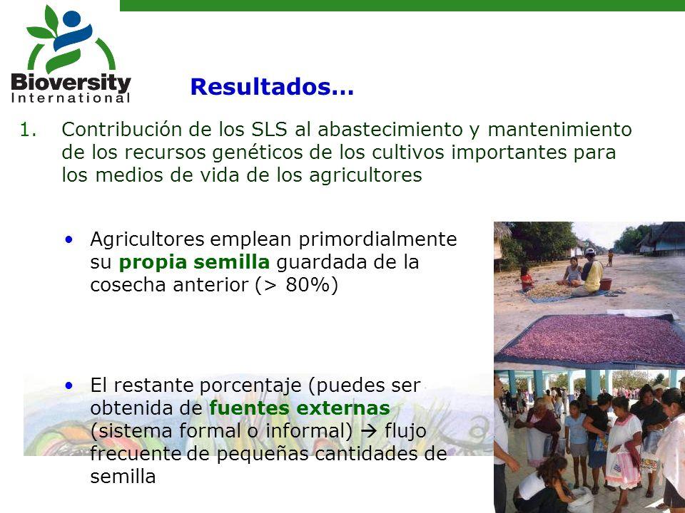 Agricultores emplean primordialmente su propia semilla guardada de la cosecha anterior (> 80%) El restante porcentaje (puedes ser obtenida de fuentes