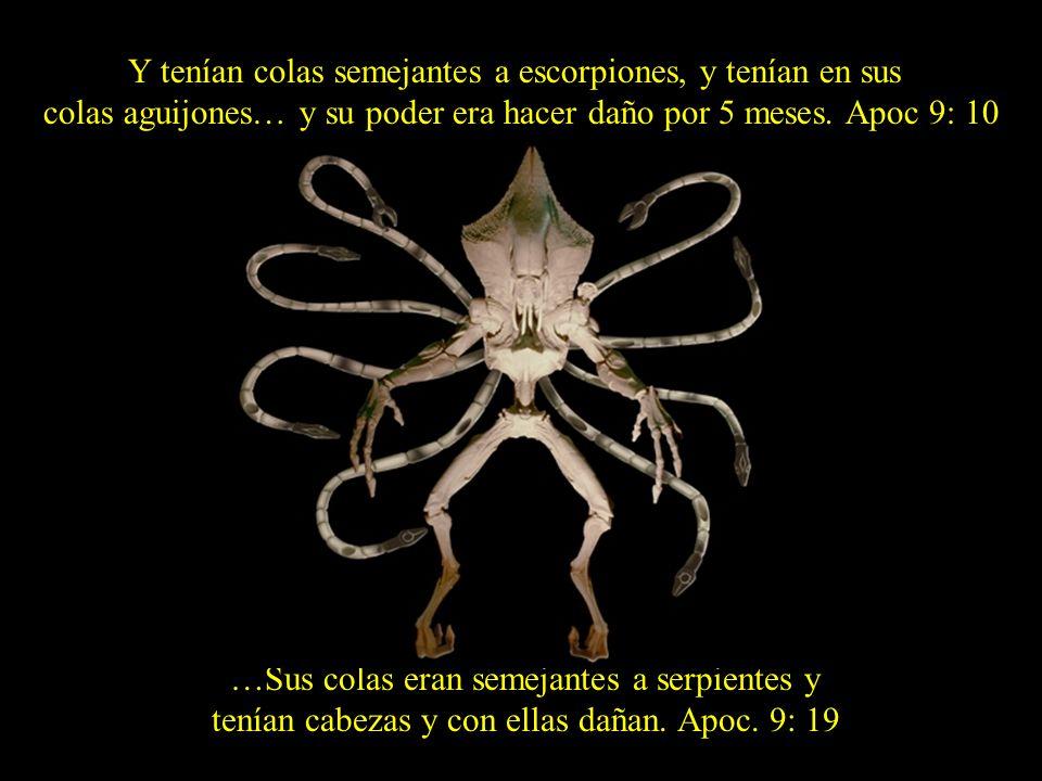 …Sus colas eran semejantes a serpientes y tenían cabezas y con ellas dañan. Apoc. 9: 19 Y tenían colas semejantes a escorpiones, y tenían en sus colas