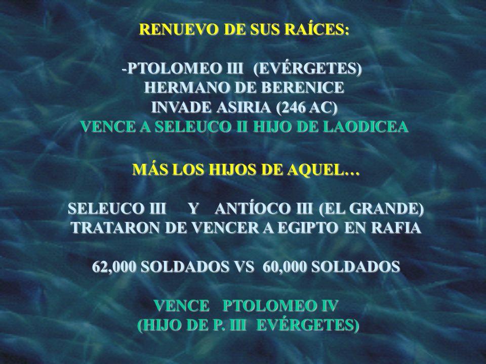 RENUEVO DE SUS RAÍCES: -PTOLOMEO III (EVÉRGETES) HERMANO DE BERENICE INVADE ASIRIA (246 AC) VENCE A SELEUCO II HIJO DE LAODICEA MÁS LOS HIJOS DE AQUEL