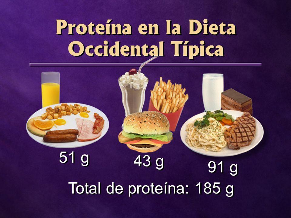 Proteína en la Dieta Occidental Típica 51 g 43 g 91 g Total de proteína: 185 g