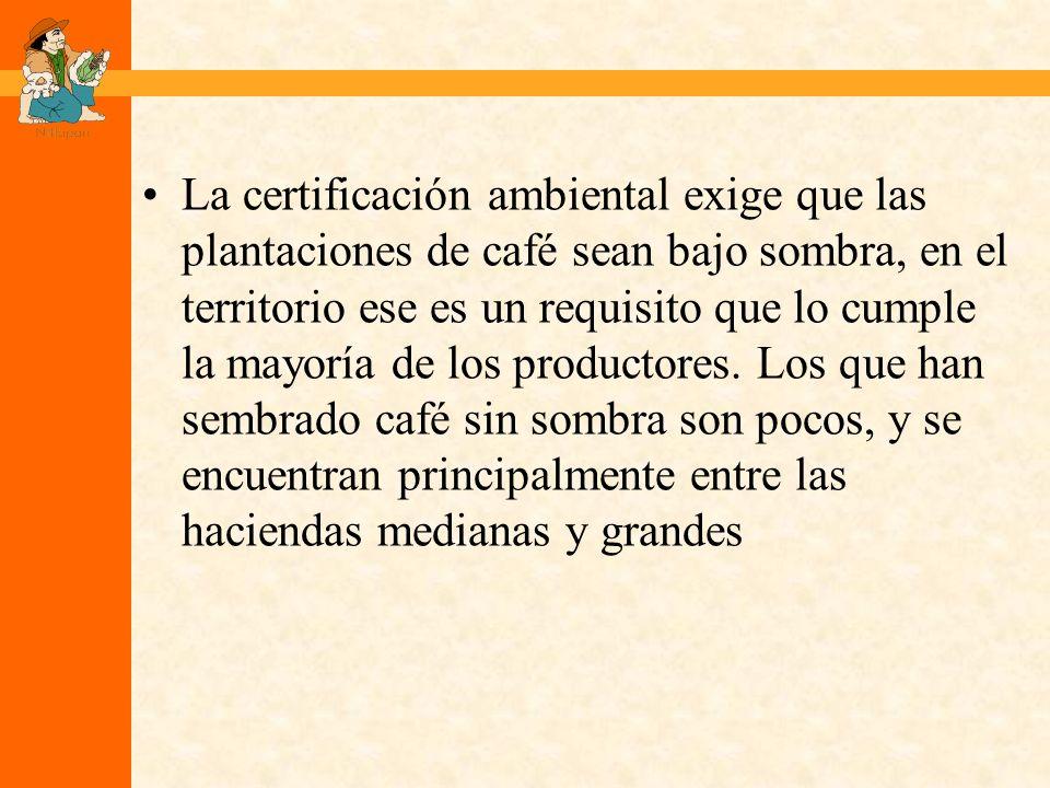 La certificación ambiental exige que las plantaciones de café sean bajo sombra, en el territorio ese es un requisito que lo cumple la mayoría de los productores.