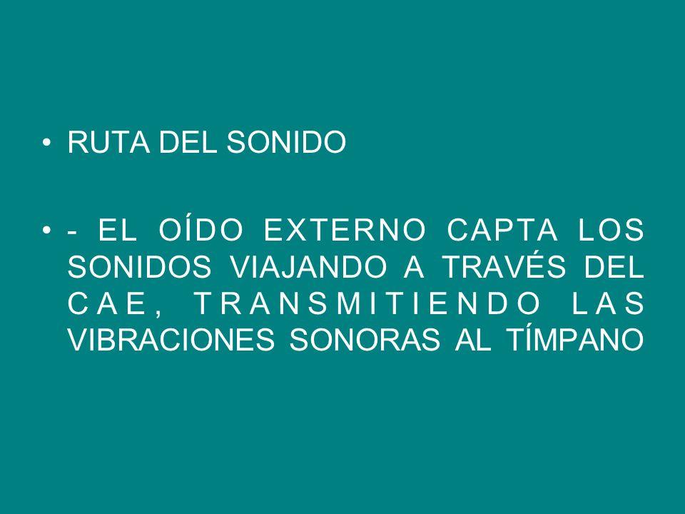 RUTA DEL SONIDO - EL OÍDO EXTERNO CAPTA LOS SONIDOS VIAJANDO A TRAVÉS DEL CAE, TRANSMITIENDO LAS VIBRACIONES SONORAS AL TÍMPANO