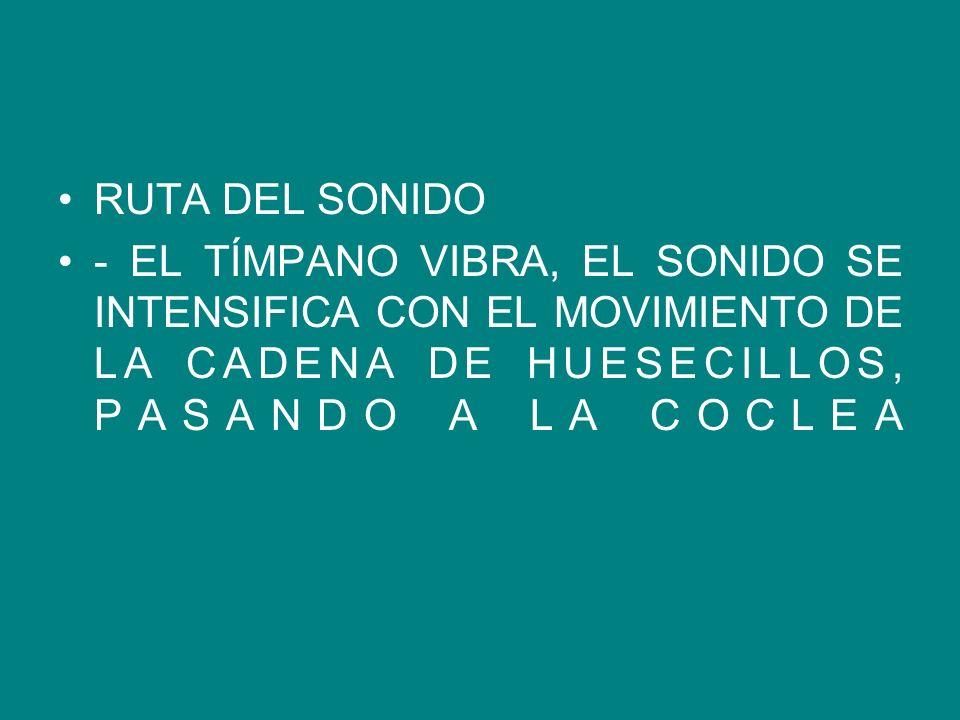 RUTA DEL SONIDO - EL TÍMPANO VIBRA, EL SONIDO SE INTENSIFICA CON EL MOVIMIENTO DE LA CADENA DE HUESECILLOS, PASANDO A LA COCLEA