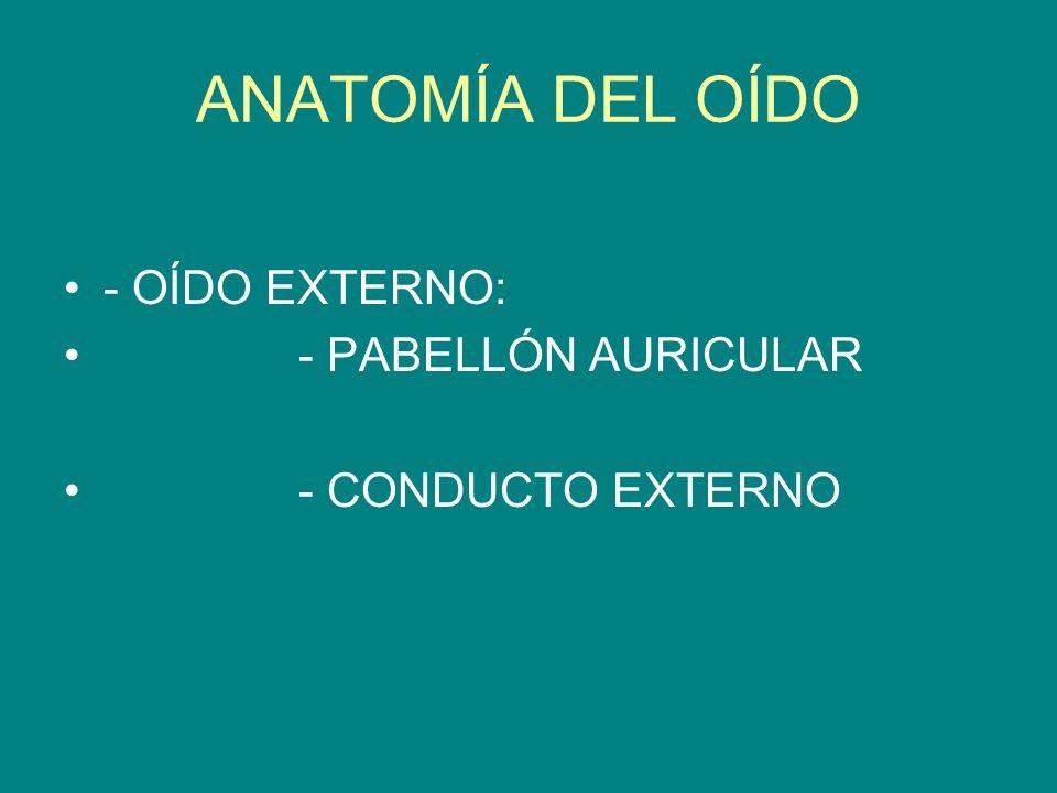 ANATOMÍA DEL OÍDO - OÍDO EXTERNO: - PABELLÓN AURICULAR - CONDUCTO EXTERNO