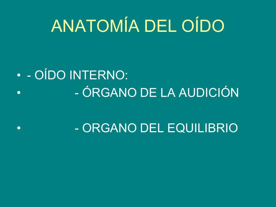 ANATOMÍA DEL OÍDO - OÍDO INTERNO: - ÓRGANO DE LA AUDICIÓN - ORGANO DEL EQUILIBRIO