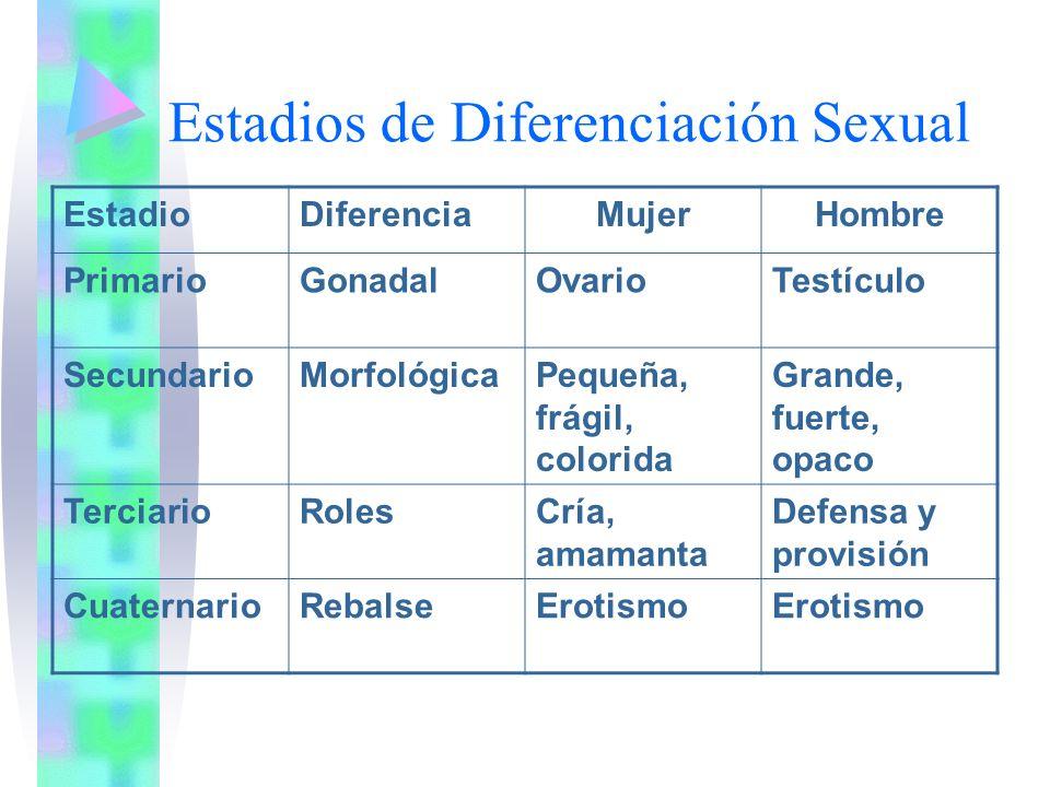 Estadios de Diferenciación Sexual EstadioDiferenciaMujerHombre PrimarioGonadalOvarioTestículo SecundarioMorfológicaPequeña, frágil, colorida Grande, f
