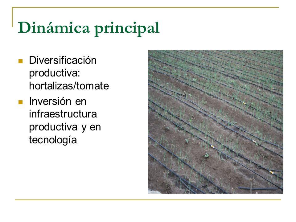 Dinámica principal Diversificación productiva: hortalizas/tomate Inversión en infraestructura productiva y en tecnología