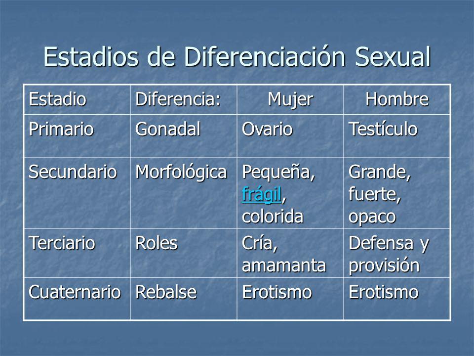 Estadios de Diferenciación Sexual EstadioDiferencia:MujerHombre PrimarioGonadalOvarioTestículo SecundarioMorfológica Pequeña, frágil, colorida frágil