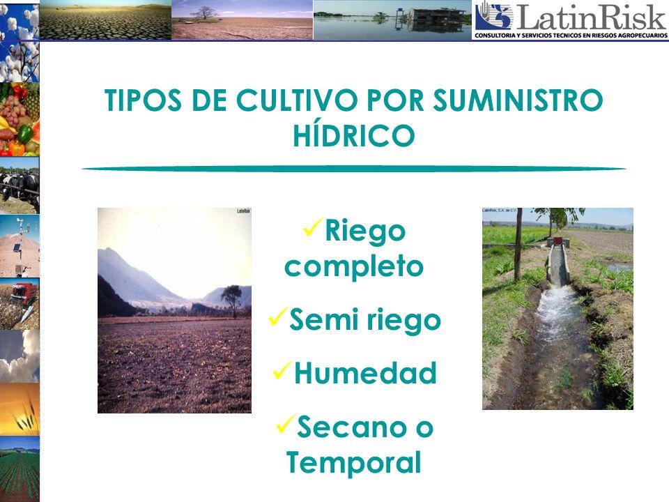 TIPOS DE CULTIVO POR SUMINISTRO HÍDRICO Riego completo Semi riego Humedad Secano o Temporal