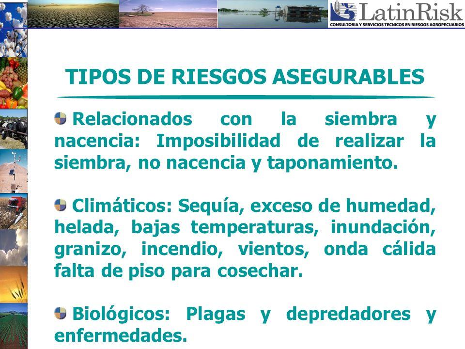TIPOS DE RIESGOS ASEGURABLES Relacionados con la siembra y nacencia: Imposibilidad de realizar la siembra, no nacencia y taponamiento. Climáticos: Seq
