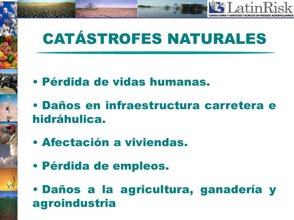CATÁSTROFES NATURALES Pérdida de vidas humanas. Daños en infraestructura carretera e hidráhulica. Afectación a viviendas. Pérdida de empleos. Daños a