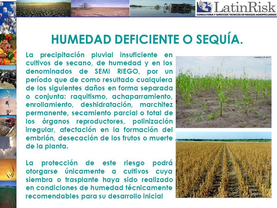 La precipitación pluvial insuficiente en cultivos de secano, de humedad y en los denominados de SEMI RIEGO, por un período que de como resultado cualq