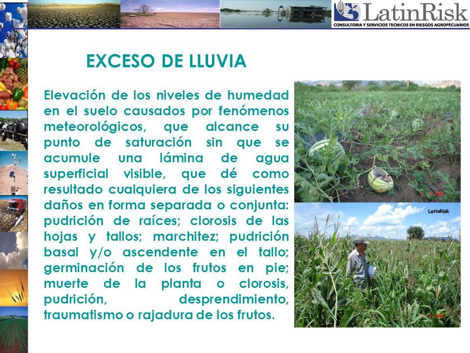 EXCESO DE LLUVIA Elevación de los niveles de humedad en el suelo causados por fenómenos meteorológicos, que alcance su punto de saturación sin que se