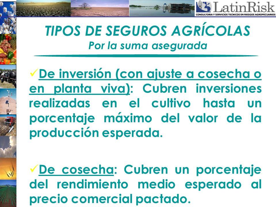 TIPOS DE SEGUROS AGRÍCOLAS Por la suma asegurada De inversión (con ajuste a cosecha o en planta viva): Cubren inversiones realizadas en el cultivo has