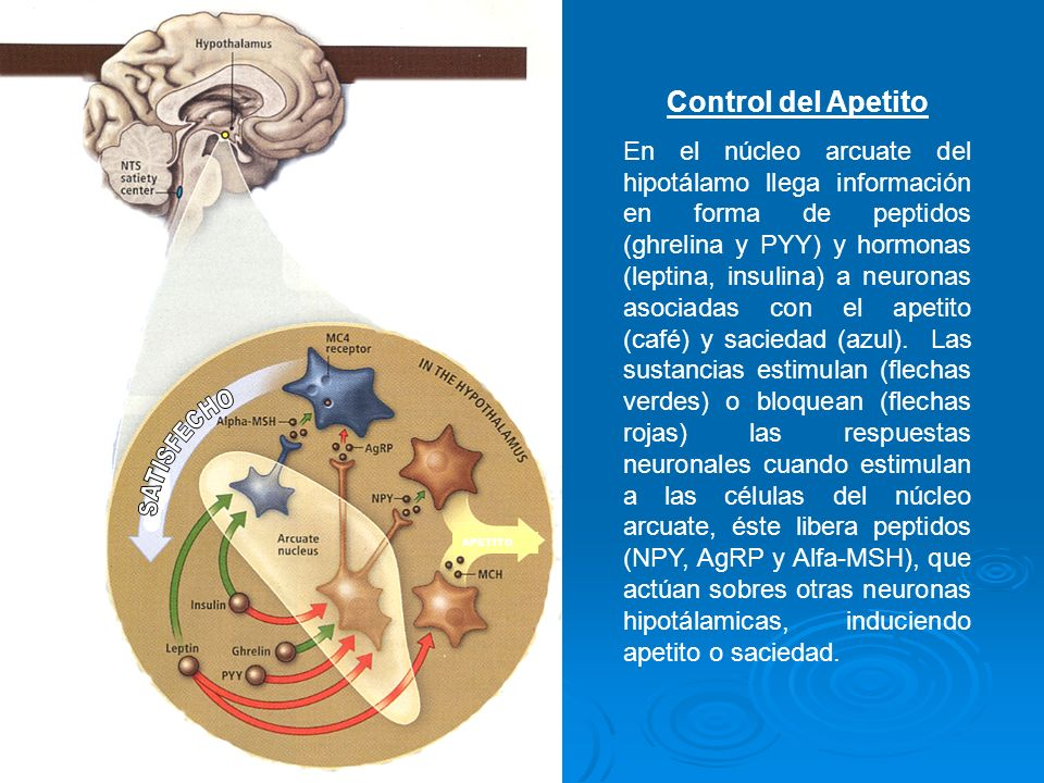 Hipotálamo Factor de Liberación Hormona Tiroidea (TRH) Factor de Liberación Hormona de Crecimiento (GHRH) Factor de Liberación Acth (CRH) DisminuidoDisminuidoDisminuido Hipófisis Tiroestimulina (TSH) Hormona de Crecimiento (hGH) Hormona Adrenocorticotrófica (Acth) DisminuidaDisminuidaDisminuida Tiroídes T3 – T4 Disminuidas SuprarrenalesCortisolDisminuido DESNUTRICIÓN TEMPRANA Y ADAPTACIÓN HIPOTÁLAMO - HIPOFISIS