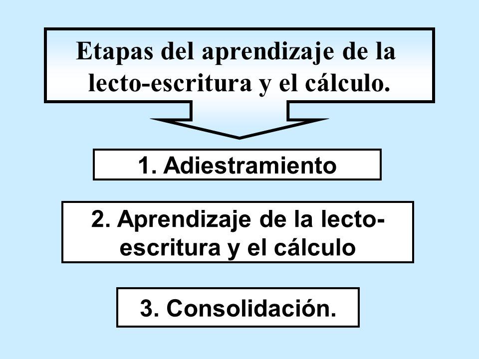 1. Adiestramiento 2. Aprendizaje de la lecto- escritura y el cálculo 3. Consolidación. Etapas del aprendizaje de la lecto-escritura y el cálculo.