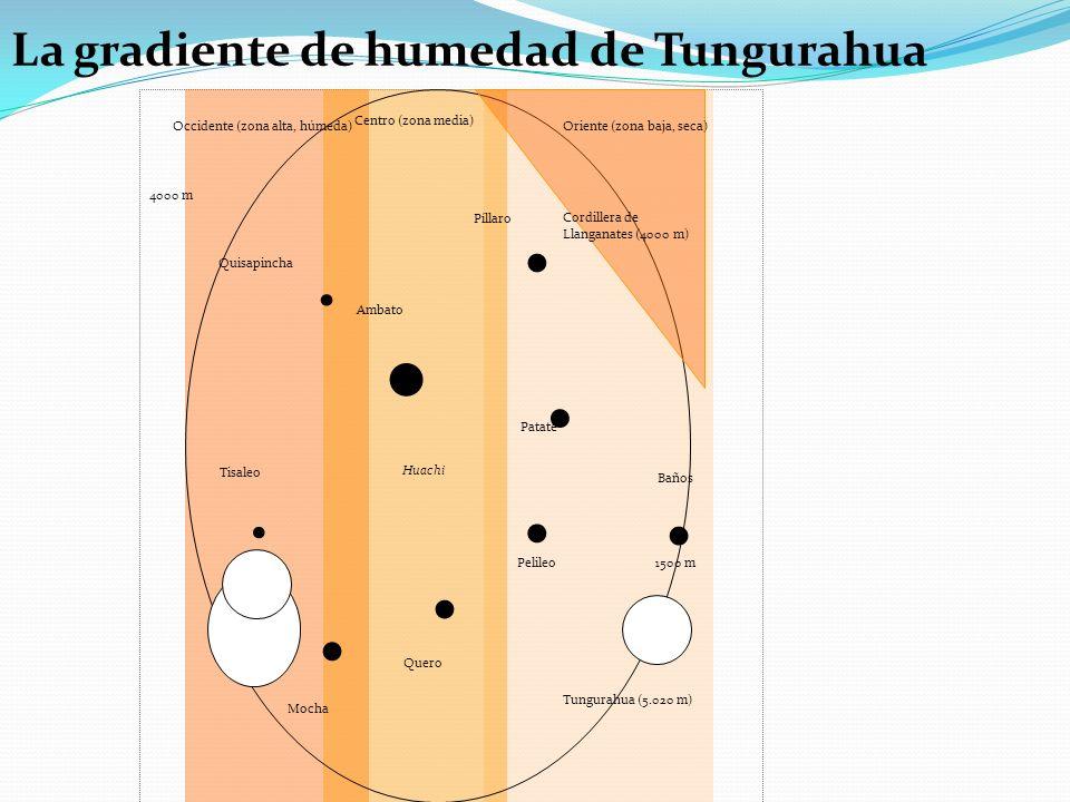 La gradiente de humedad de Tungurahua Píllaro Baños Ambato Mocha Quero Pelileo Patate Quisapincha Tisaleo Occidente (zona alta, húmeda) Centro (zona media) 1500 m 4000 m Tungurahua (5.020 m) Huachi Oriente (zona baja, seca) Cordillera de Llanganates (4000 m)