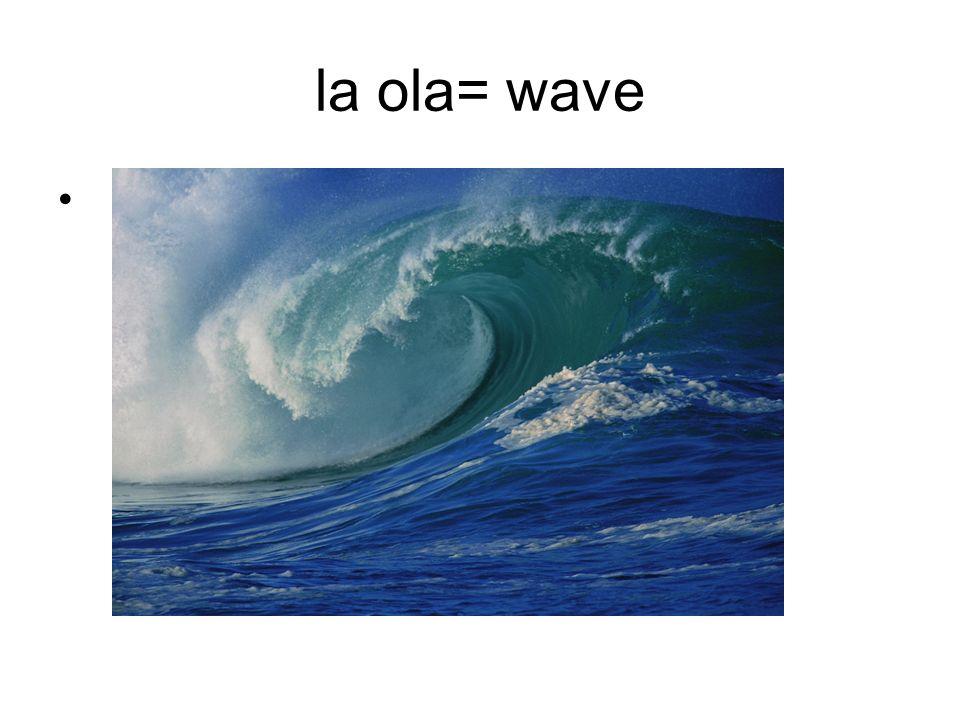 practicar el surfing= to surf