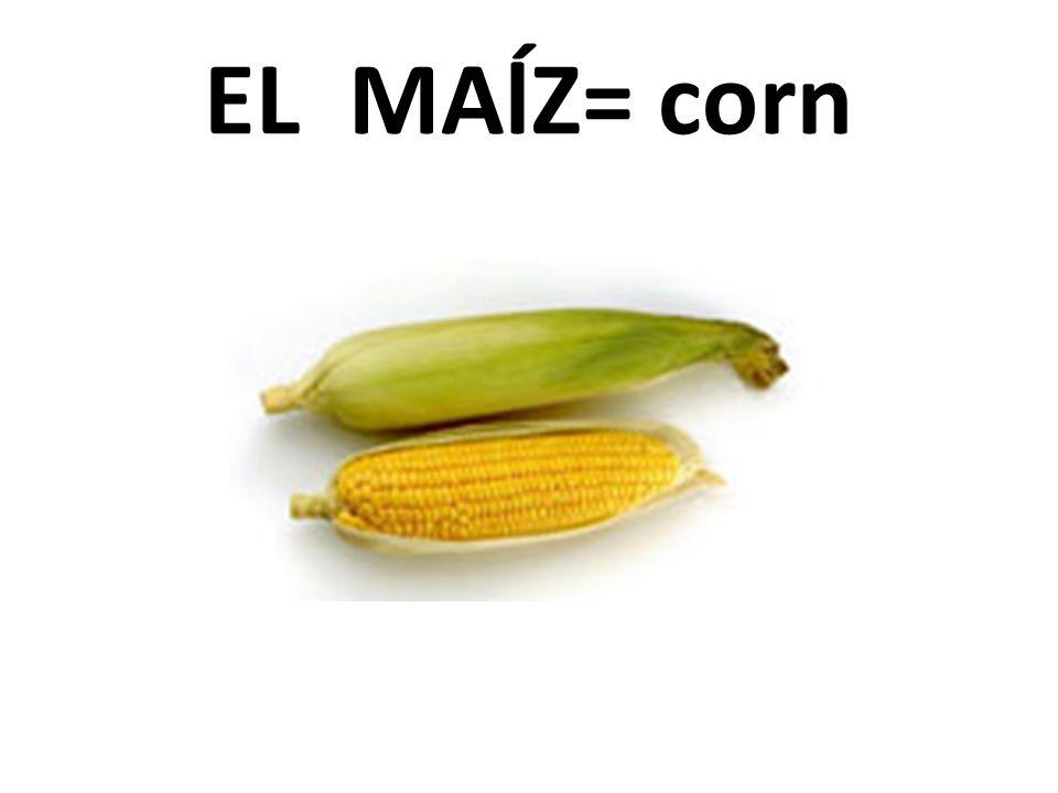 EL MAĺZ= corn