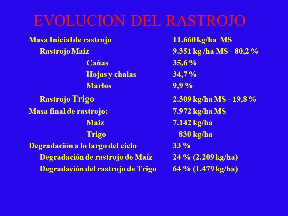 EVOLUCION DEL RASTROJO Masa Inicial de rastrojo11.660 kg/ha MS Rastrojo Maiz9.351 kg /ha MS - 80,2 % Cañas35,6 % Hojas y chalas34,7 % Marlos9,9 % Rast