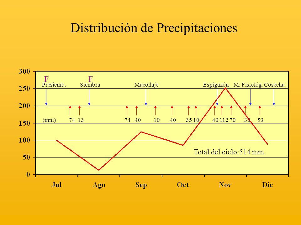 Distribución de Precipitaciones Presiemb. Siembra Macollaje Espigazón M. Fisiológ. Cosecha (mm) 74 13 74 40 10 40 35 10 40 112 70 30 53 F F Total del