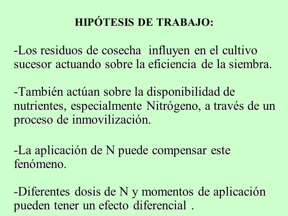 HIPÓTESIS DE TRABAJO: -Los residuos de cosecha influyen en el cultivo sucesor actuando sobre la eficiencia de la siembra. -También actúan sobre la dis