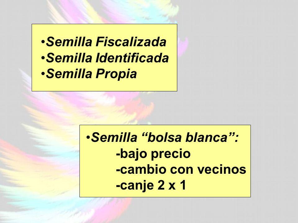Semilla Fiscalizada Semilla Identificada Semilla Propia Semilla bolsa blanca: -bajo precio -cambio con vecinos -canje 2 x 1