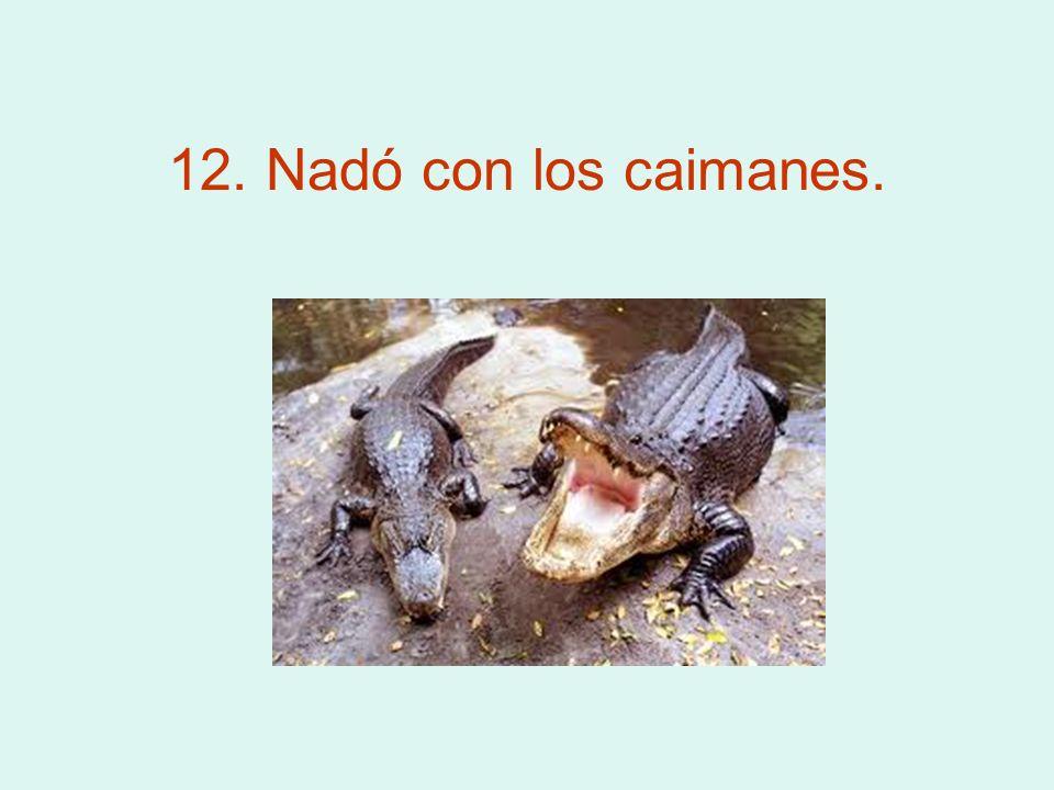 12. Nadó con los caimanes.