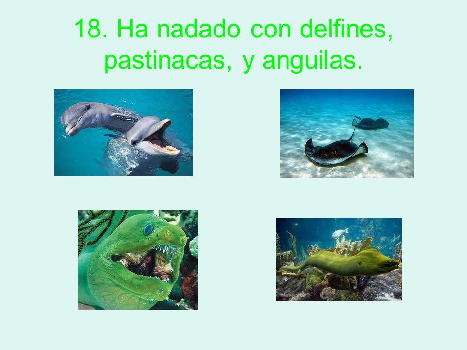 18. Ha nadado con delfines, pastinacas, y anguilas.