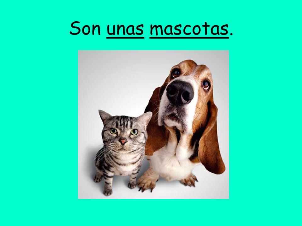 Son unas mascotas.