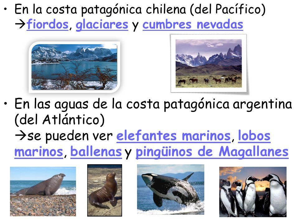 En la costa patagónica chilena (del Pacífico) fiordos, glaciares y cumbres nevadas En las aguas de la costa patagónica argentina (del Atlántico) se pu