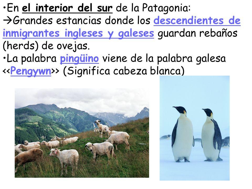 Patagonia y Tierra del Fuego Nombrados por el explorador Fernando de Magallanes Cuando él llegó a lo que hoy es Patagonia, se dice que gritó > porque los indígenas tehuelches que vio tenían pies grandes.