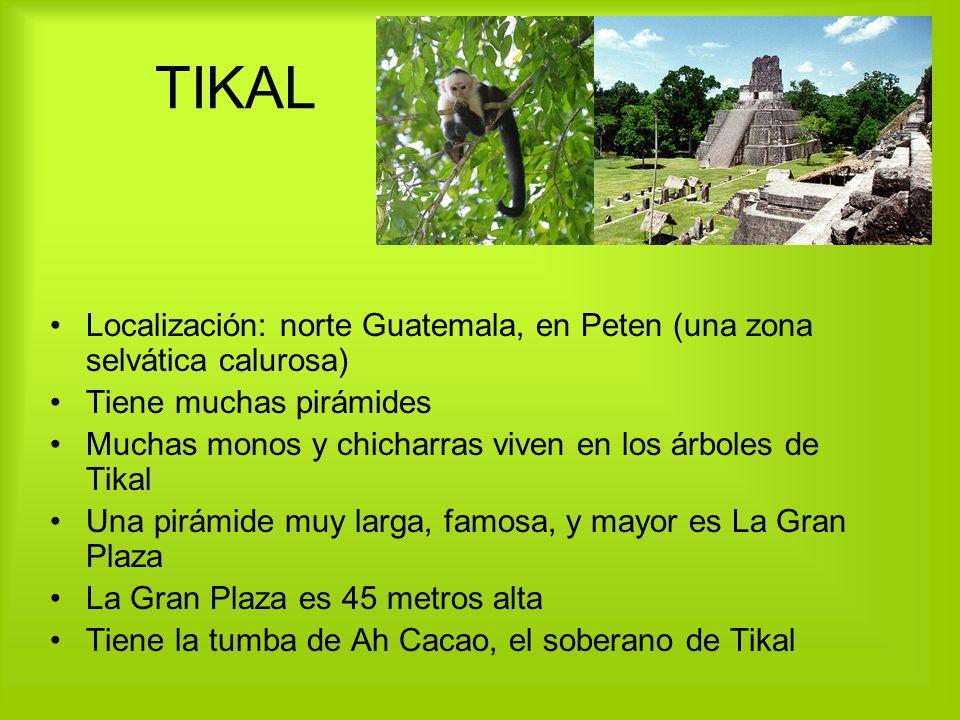 TIKAL Localización: norte Guatemala, en Peten (una zona selvática calurosa) Tiene muchas pirámides Muchas monos y chicharras viven en los árboles de T