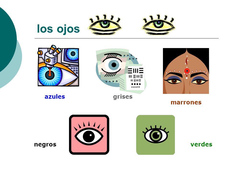 los ojos azulesgrises marrones negrosverdes