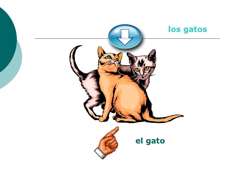 el gato los gatos