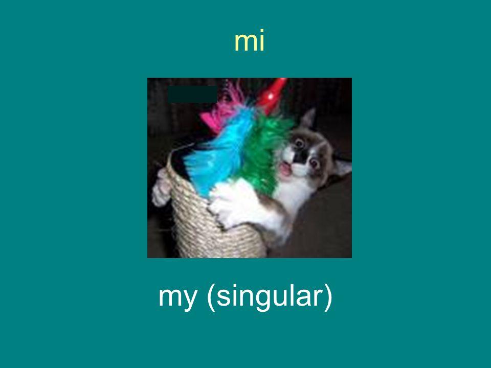 mi my (singular)