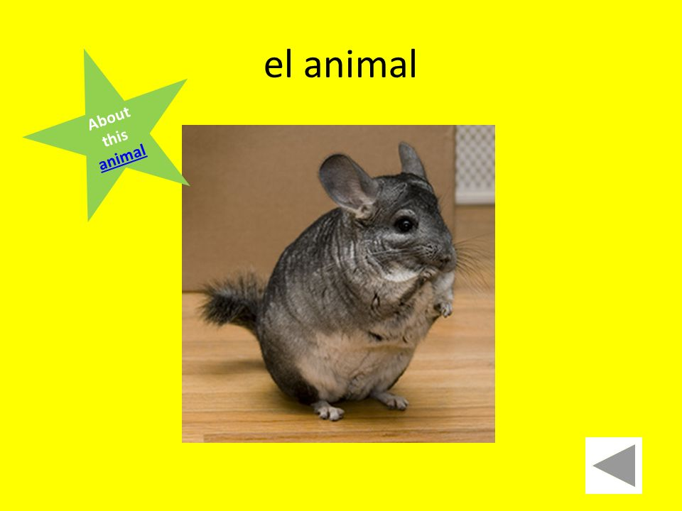 el animal About this animal