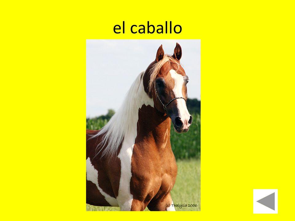 el caballo